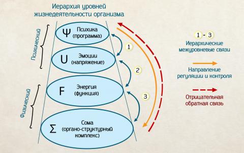 Механизм соматизации